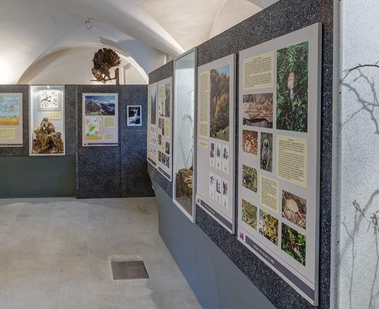 Inaugurazione nuova esposizione naturalistica