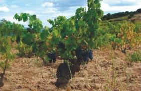 CANNONAU, vino e anima di Sardegna