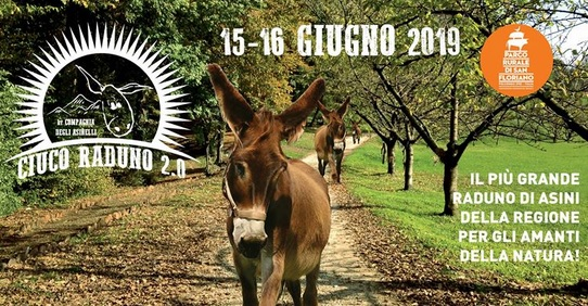Ciuco Raduno 2019 - Asinelli e Natura in Friuli