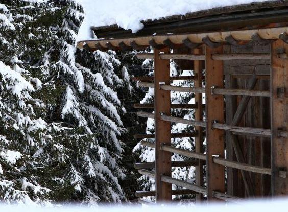 Vivi l'inverno nelle Alpi Carniche e Dolomiti Friulane: Escursione storico-naturalistica