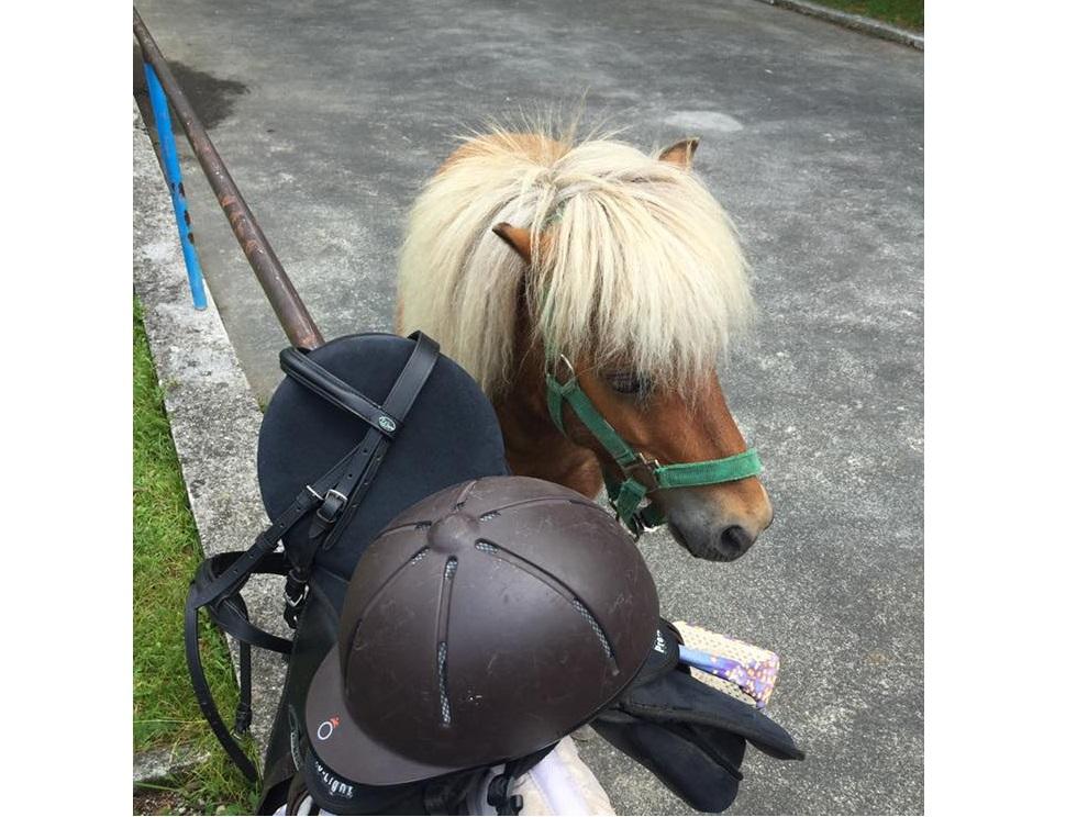 Vivi l'Inverno nelle Alpi Carniche e Dolomiti Friulane -Pony Club