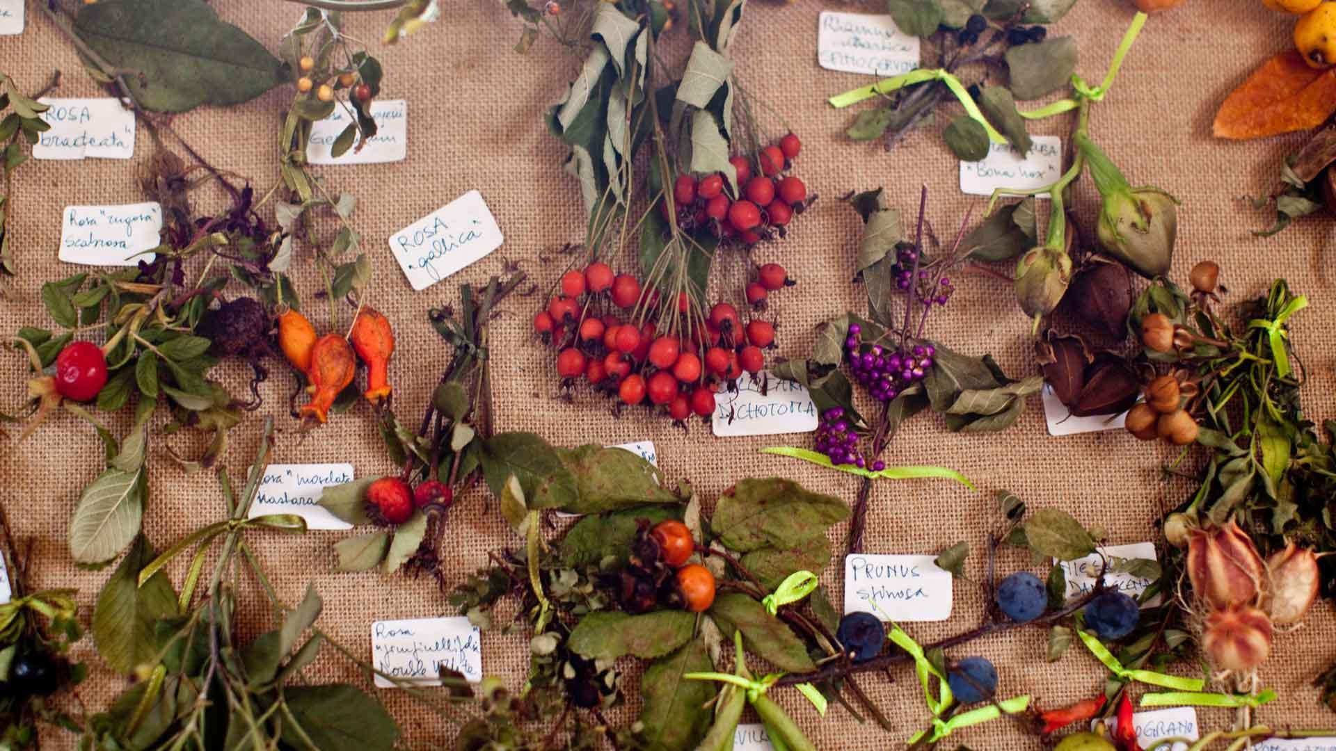 I fiori in tazza: imparare a riconoscere le piante officinali e aromatiche