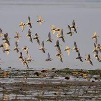 Giornata degli uccelli migratori alla Riserva Naturale regionale della Valle Cavanata
