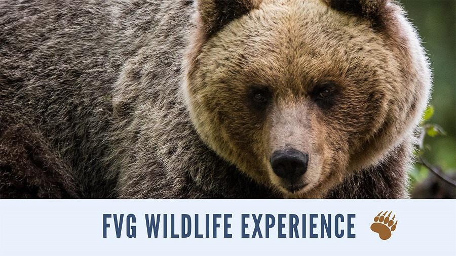 FVG Wildlife Experience - La primavera dell'Orso